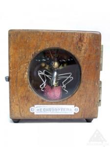 Mechidoptera.